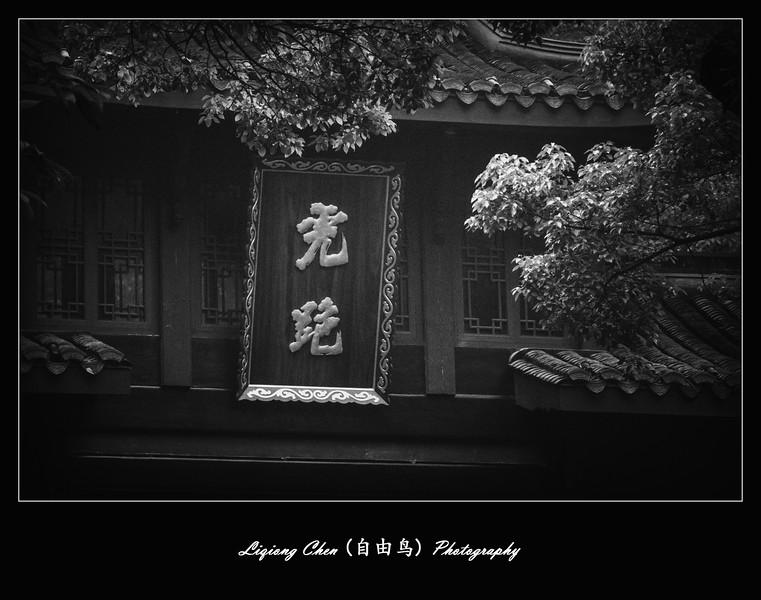 杭州虎跑,說出它的秘密