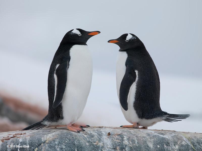 Antarctica Workshop