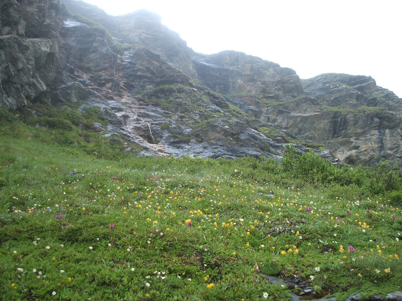 A lot of alpine flowers beside the trail.