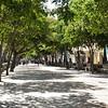Sunny Walk Down El Prado
