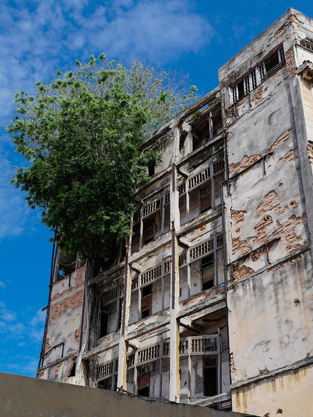Strangler Fig taking over the building adjacent to Floridita,  Hemingway's favorite bar,  Havana, Cuba, June 11. 2016.