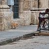 Havana-1784tda