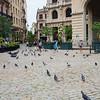 Havana-1428tna