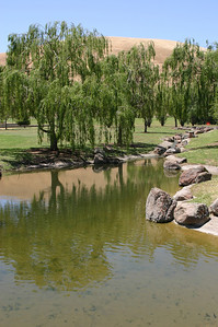 A small, artificial but natural-looking, stream and pond drift through the grass, the still waters reflecting the plentiful willows.