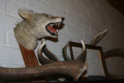 This photo is for Team Small Dog, who likes taxidermy.
