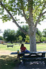 Several picnic tables are in the shade, and one of them is actually available, which is important in this heat.