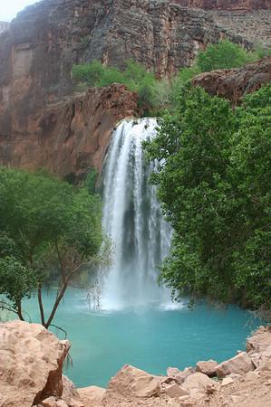 Day 4 Supai; Navajo, Havasu, and Mooney Falls; wildlife and flowers