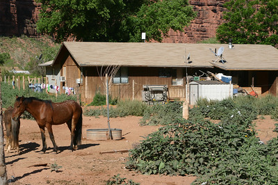 Most of the homes in the village seemed to have a paddock with one or more horses, mules, or cattle.