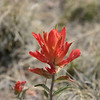 These paintbrush type flowers dotted the plains and I had to stop and take one's picture.