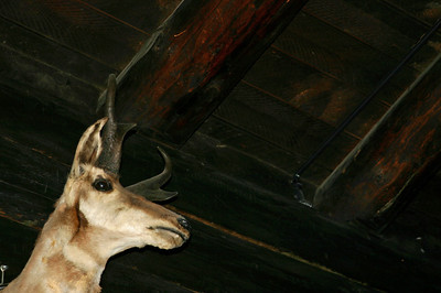 I tried a bunch of photos to make it look like this antelope (head) was just wandering through.