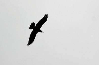Wandering along the canyon rim, I snapped several photos of turkey vultures against the overcast sky.