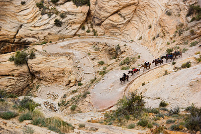 A mule train going down the steep switchbacks at the start of the trail