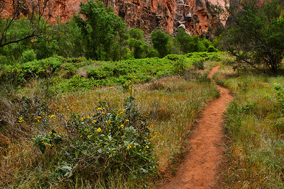 Blooming wildflowers dotted the trail through Ghost Canyon