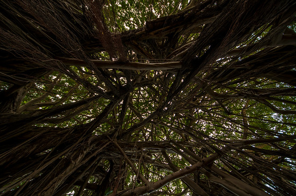 Tangled branches overhead