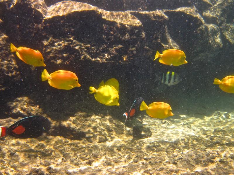 Hawaii '17 -  930