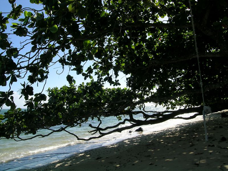 One of the rope swings in the foreground they are tied to trees all along the beaches