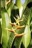 Kauai Flower 13