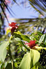 Kauai Flower 03