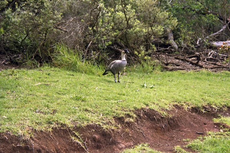 Kaui Bird