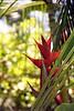 Kauai R Caribaea 1