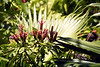 Kauai Flower 06