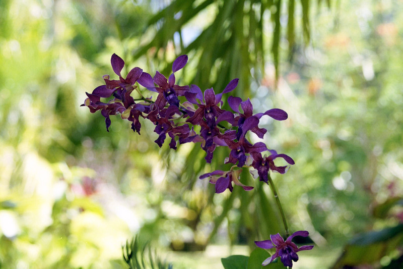 Kauai Flower 01