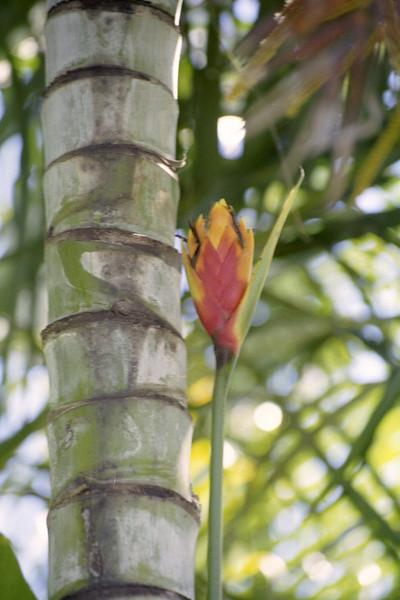 Kauai Flower 09