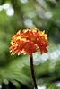 Kauai Flower 04