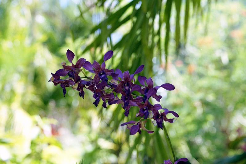 Kauai Flower 02