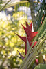 Kauai R Caribaea 2