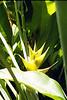 Kauai Y Caribaea