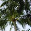 Hawaii 2004 (7)