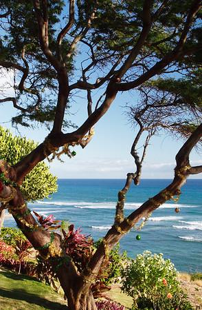 Surfing Waikiki with Mikey-ki