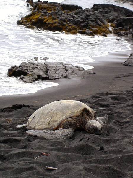 06/27/06: Punaluu Black Sand Beach.