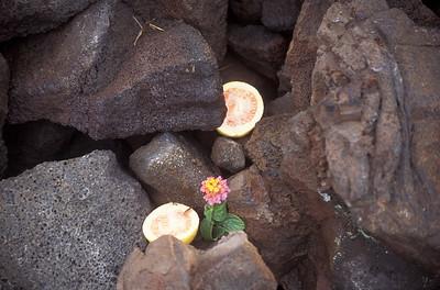 Hawaii2006_24
