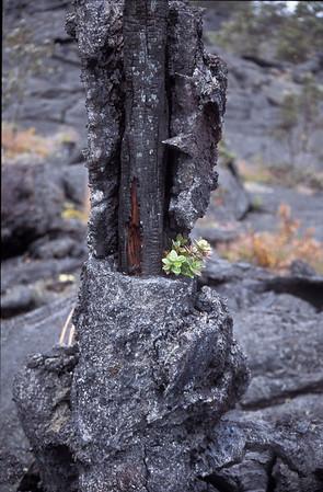 Hawaii2006_29