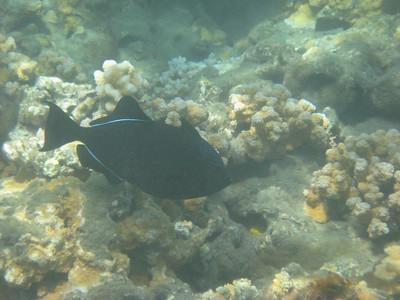070623 Snorkeling