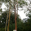 Me and Susan among the very tall eucalyptus trees