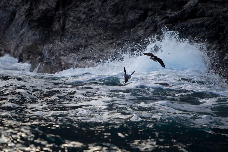 Hawaii_Jason_Zucco_Photography-188