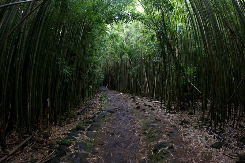 Hawaii_Jason_Zucco_Photography-134