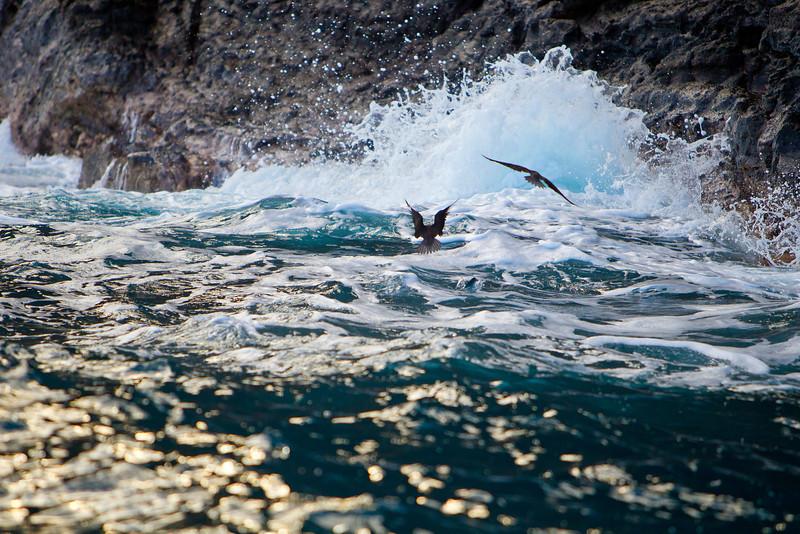 Hawaii_Jason_Zucco_Photography-187