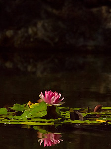 Mauna Lani lily pad.