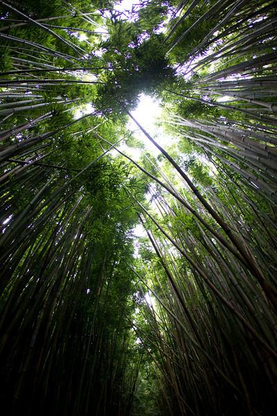 Hawaii_Jason_Zucco_Photography-135