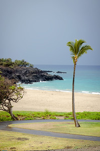 Lone coconut, Hapuna Beach