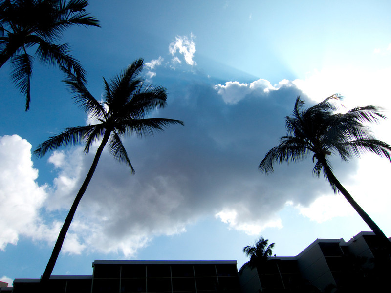 Palm trees <i>Maui, Hawaii</i>