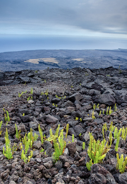 Big Island Lava Flows...<br /> <br /> Life seems to be coming back to these lands...
