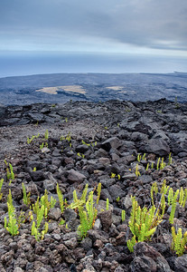 Big Island Lava Flows...  Life seems to be coming back to these lands...