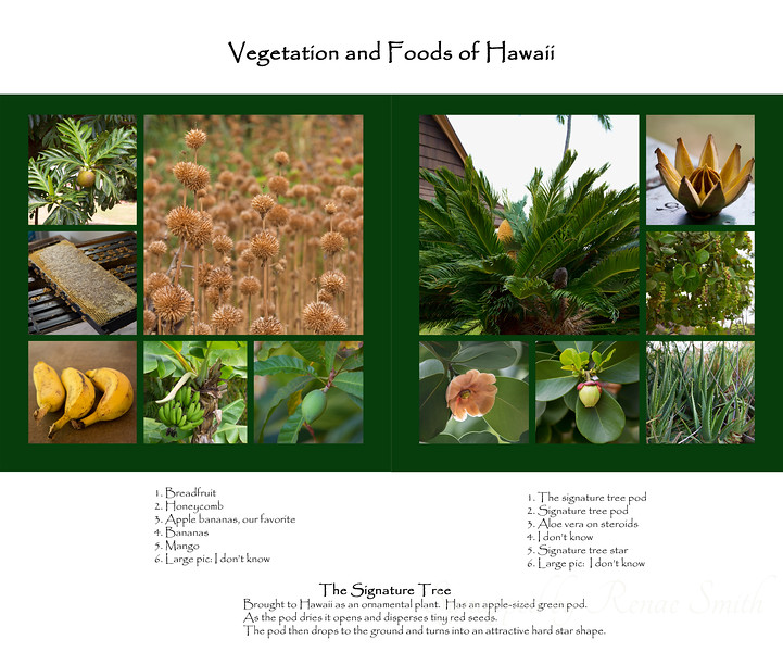 Vegetation and foods I found in Hawaii<br /> <br /> The descriptions go from left to right, if that makes any sense =)