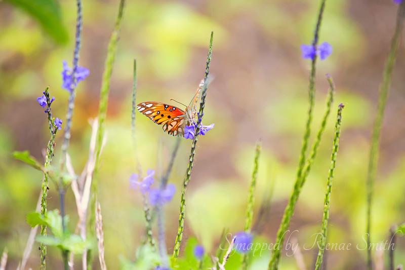 Imagine my surprise to find butterflies in Hawaii!!