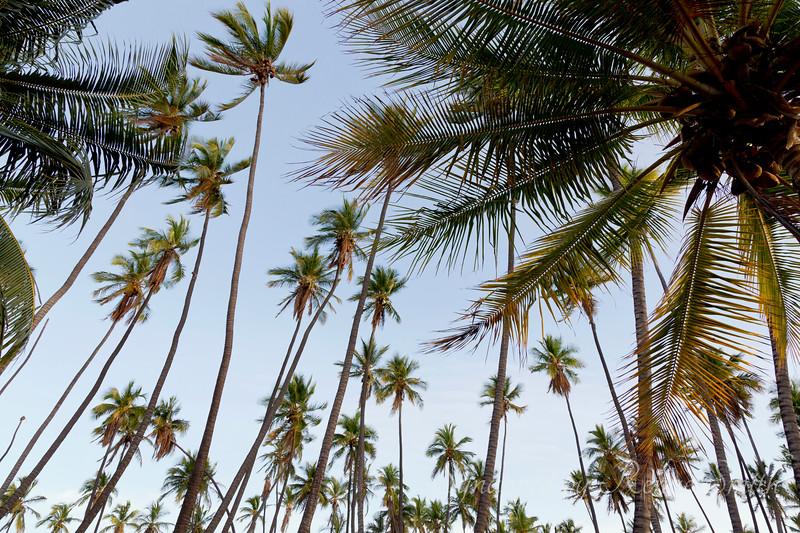 Hula Trees